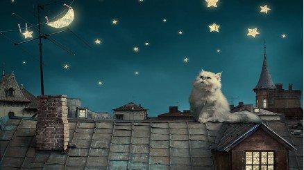 Kedi ve Gece Duvar Kağıdı