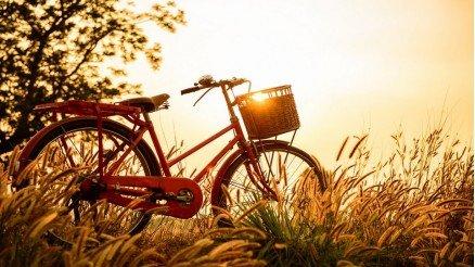 Vintage Bisiklet Duvar Kağıdı