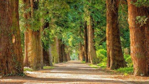 Ağaçlı Yol Duvar Kağıdı