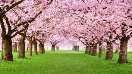 Bahar Vakti Ağaçlı Yeşil Yol Duvar Kağıdı