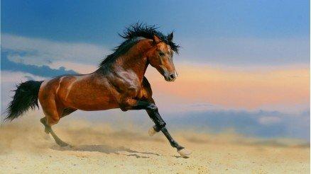 At Duvar Kağıdı