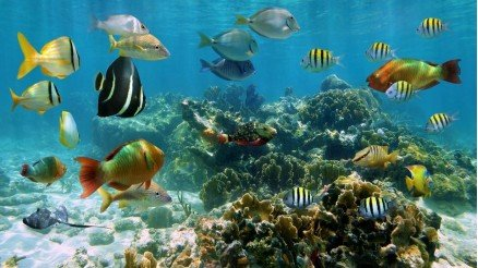 Balıklar Resif Duvar Kağıdı