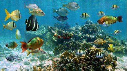 Renkli Balıklar Duvar Kağıdı