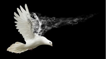 Beyaz Güvercin Duvar Kağıdı