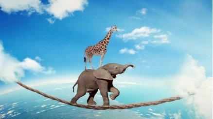 Abstract Fil ve Zürafa Duvar Kağıdı