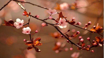 İlkbahar Duvar Kağıdı