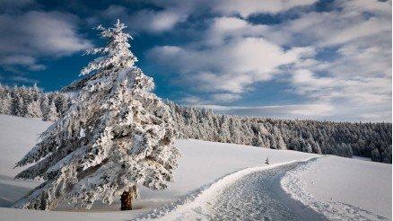 Karlar Altındaki Orman Duvar Kağıdı