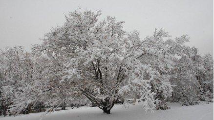 Karlar Altındaki Ağaç Duvar Kağıdı