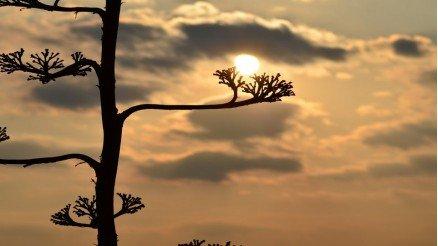 Gün Batımına Doğru Ağac Yaprakları Duvar Kağıdı