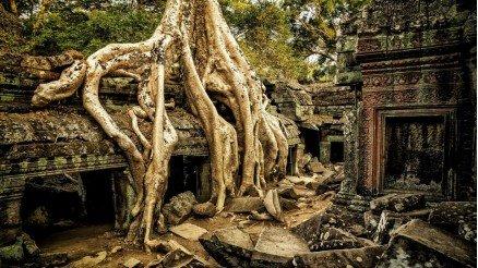 Ağaç Kökleri Duvar Kağıdı