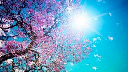 Ağaç ve Gökyüzü Duvar Kağıdı