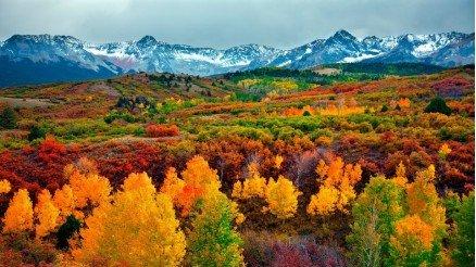 Doğanın Mucizesi Renkli Orman Duvar Kağıdı