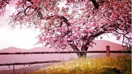 İlkbahar Manzarası Duvar Kağıdı
