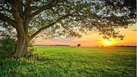 Ağaç Altından Gün Batımı Duvar Kağıdı