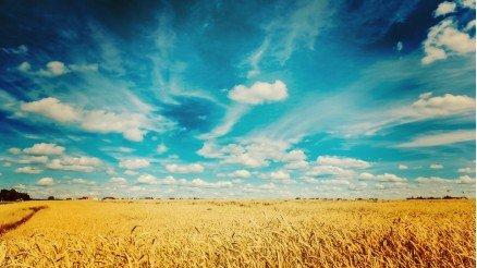 Burçak Tarlası ve Gökyüzü Duvar Kağıdı