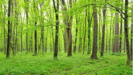 Balta Girmemiş Orman Duvar Kağııd