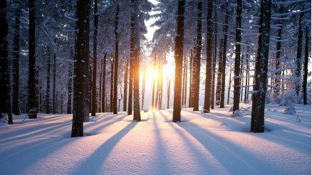 Karlı Ormanda Süzülen Güneş Duvar Kağıdı