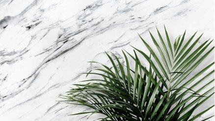 Tropikal Desenli Duvar Kağıtları
