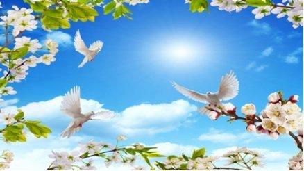 Gökyüzündeki Papatya ve Kuşlar Duvar Kağıdı
