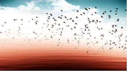 Kırmızı Deniz ve Kuşlar Duvar Kağıdı