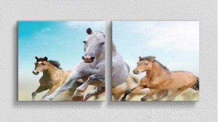HYV-110017005 - Hayvanlar Alemi Kanvas Tablo