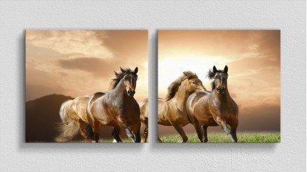 HYV-110017006 - Hayvanlar Alemi Kanvas Tablo