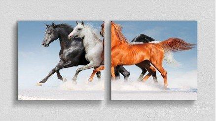 HYV-110017008 - Hayvanlar Alemi Kanvas Tablo