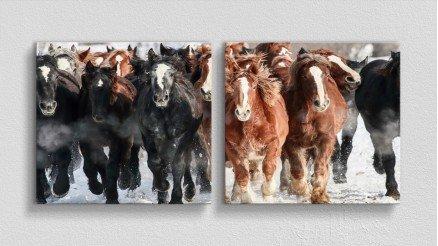 HYV-110017010 - Hayvanlar Alemi Kanvas Tablo