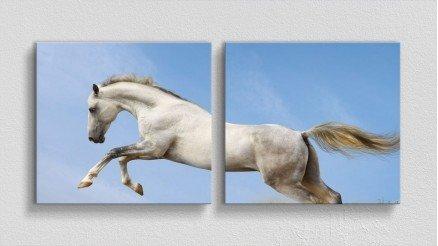 HYV-110017016 - Hayvanlar Alemi Kanvas Tablo
